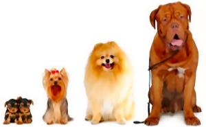 leggi in basso il materiale contenuto e gli argomenti trattati per il corso addestramento cani bari